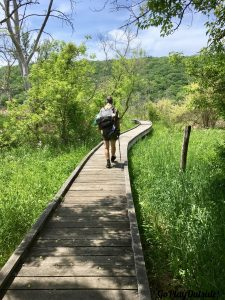 A Boardwalk on the Appalachian Trail in New York State
