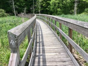 Boardwalk on the Appalachian Trail New York State