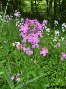 We Saw Lot of Pretty Wildflowers