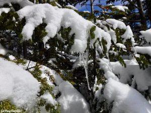 Big Moose Mountain Winter Hike Ski Snowshoe Greenville Moosehead Lake Region