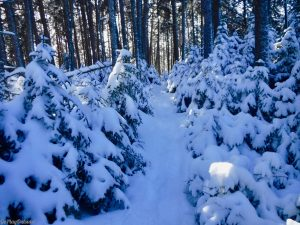 Greenville Moosehead Lake Area Little Moose Mountain Winter Snowshoe
