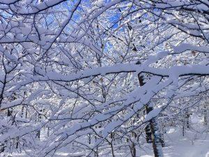 Greenville Moosehead Lake Area Little Moose Mountain Winter Snowshoe